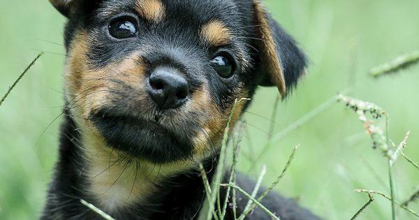 O psiej adopcji. Adoptuj przyjaciela a nie kupuj